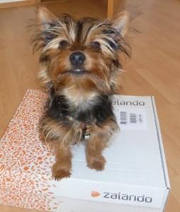 Oskar auf meinem Zalando Paket