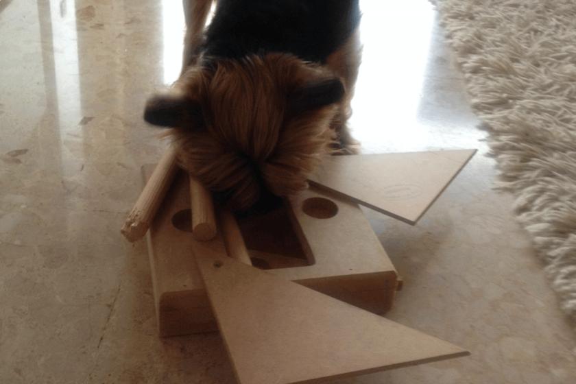intelligenzspielzeug hund